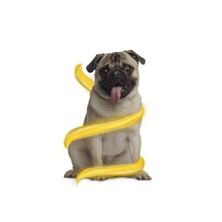 WOOW - Perro con WOOSH