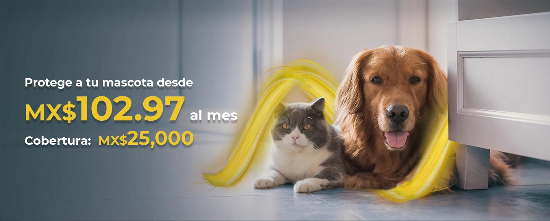 Banner principal de WOOW - Seguro de Mascotas